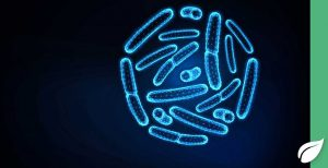 Die Rolle der Darmbakterien